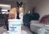 gezond havermout emmer op tafel met daar bovenop een kat zittend